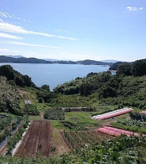 organic farm 風の谷